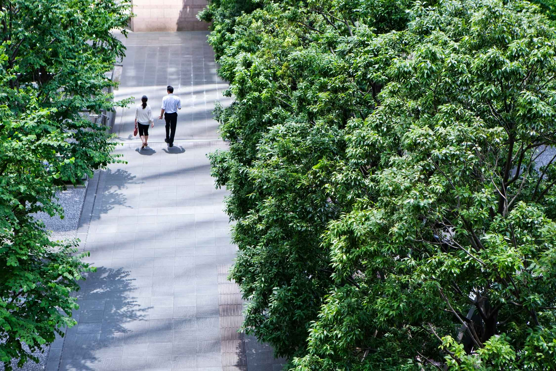 Image of a couple walking along a treelined street
